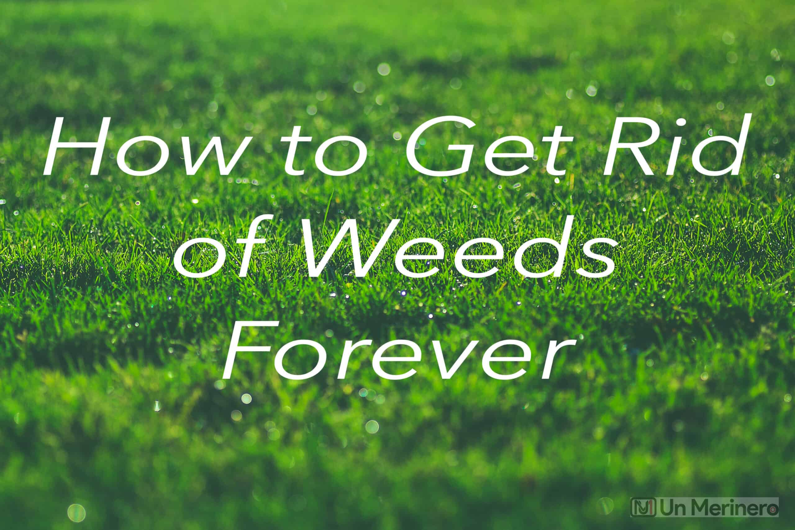 How to Get Rid of Weeds Forever
