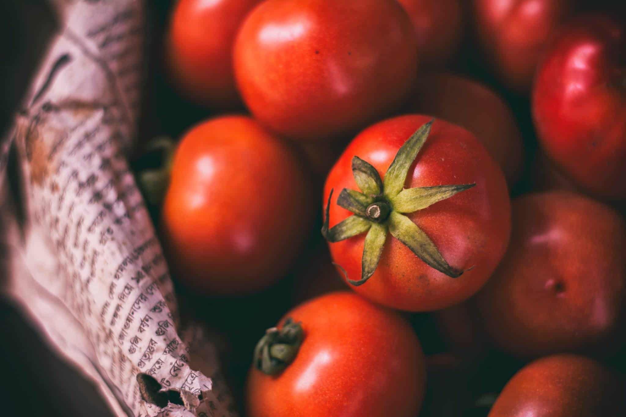 How to Grow Tomatoes Indoors with Artificial Lights