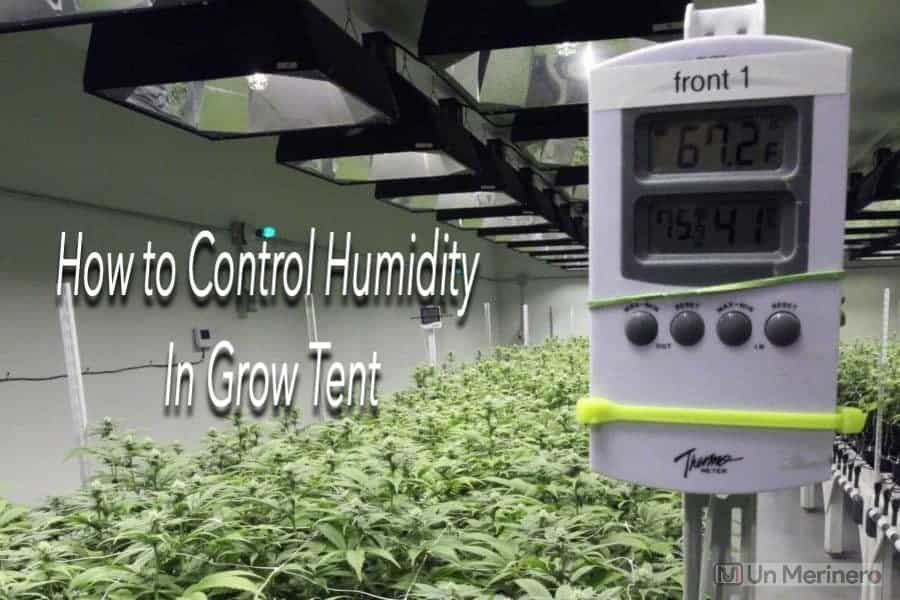 How to Control Humidity in Grow Tent