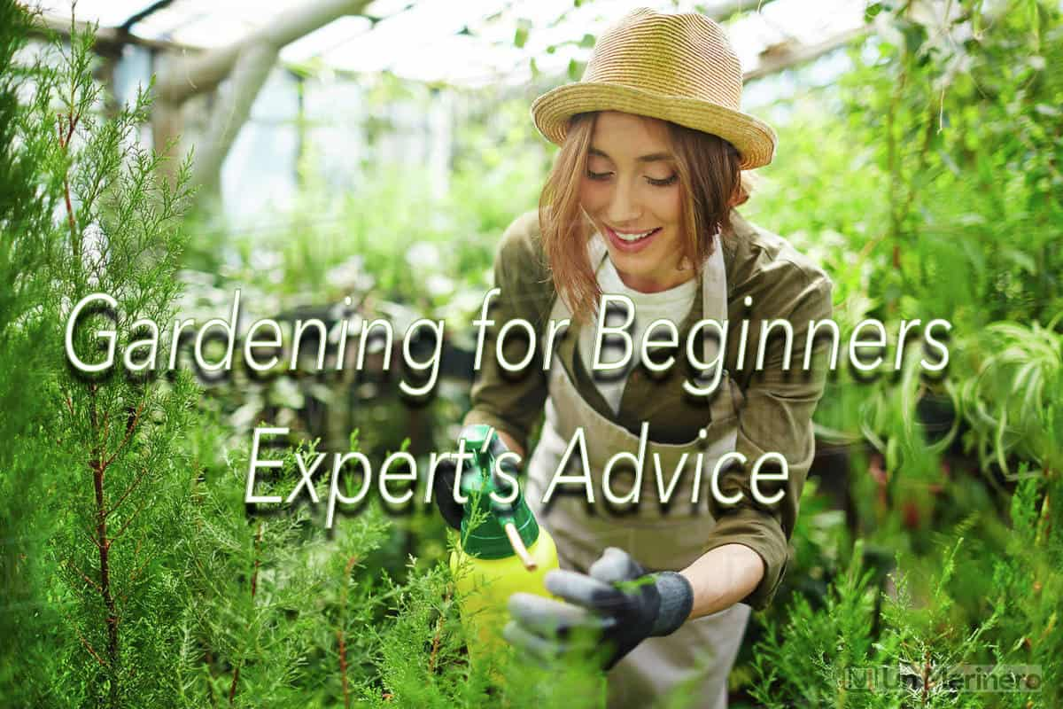 Gardening Tips For Beginners - Best Gardening Tips for Beginners