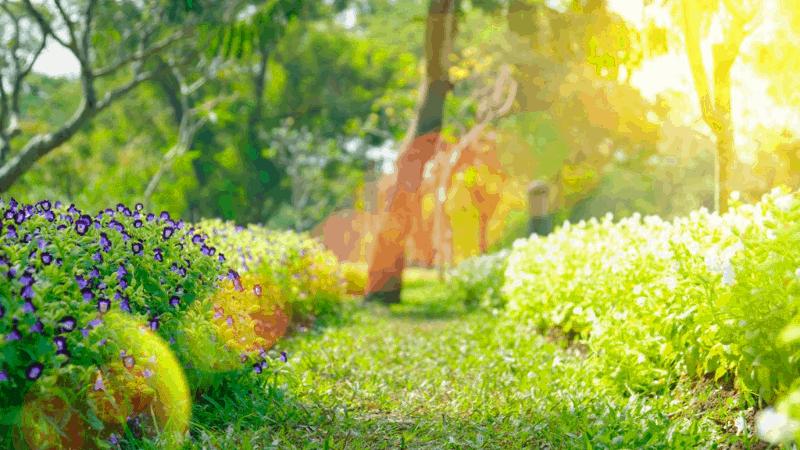 Sunlight on the Garden - Beginners tips for gardening
