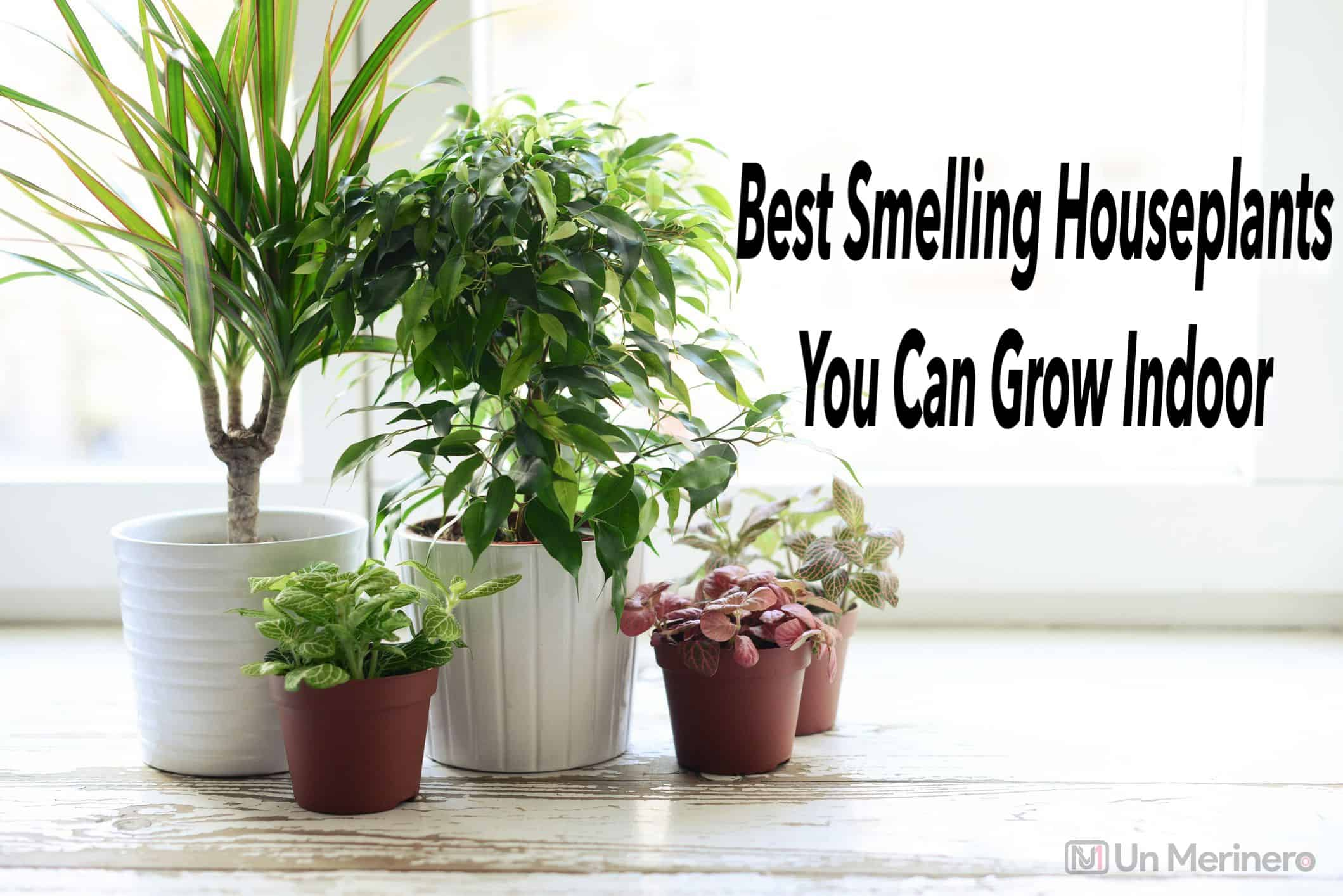Best Smelling Houseplants to grow indoor
