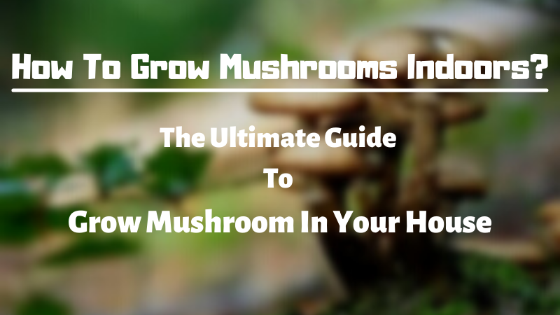 How To Grow Mushrooms Indoors - The Ultimate Guide To Grow Mushroom In Your House