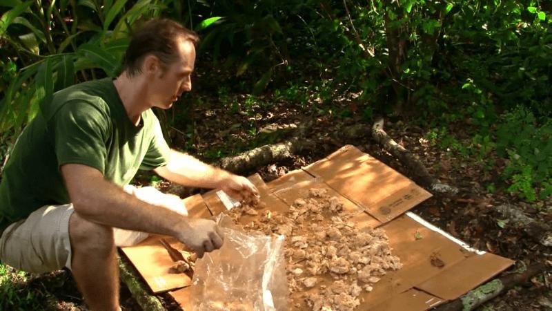 How to make mushroom bed