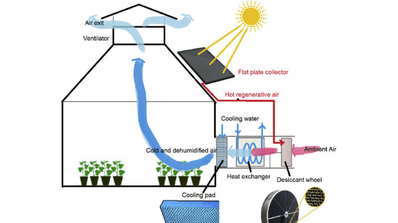 Effects of The Ventilation System On Plants
