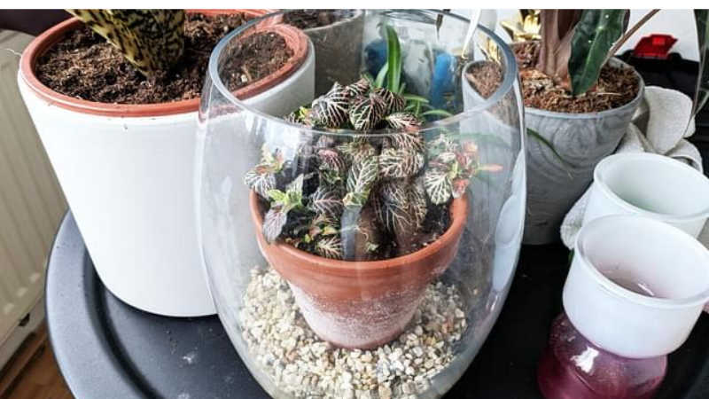 Two Pots to Increase Humidity