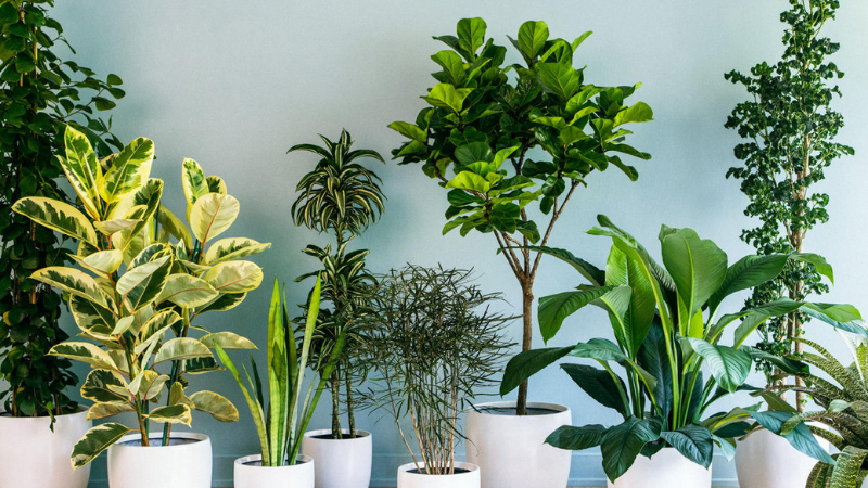 How to Increase Humidity for Houseplants - step two - Decorate Your Plants Group Wise