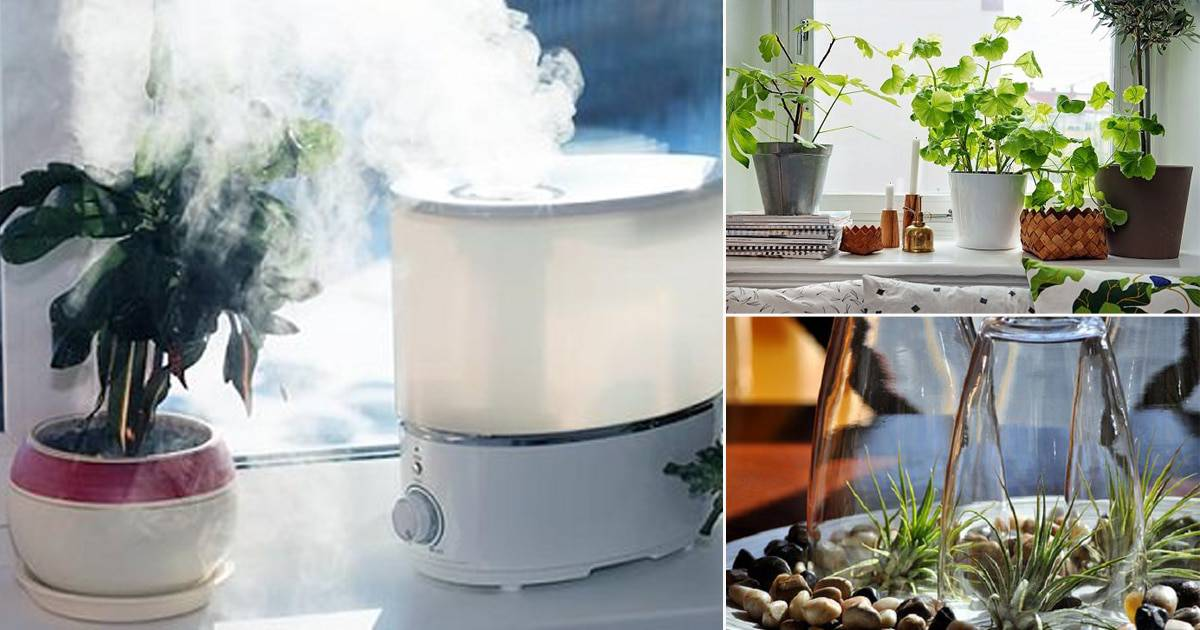 Use Two Pots to Increase Humidity - how to increase humidity for plants
