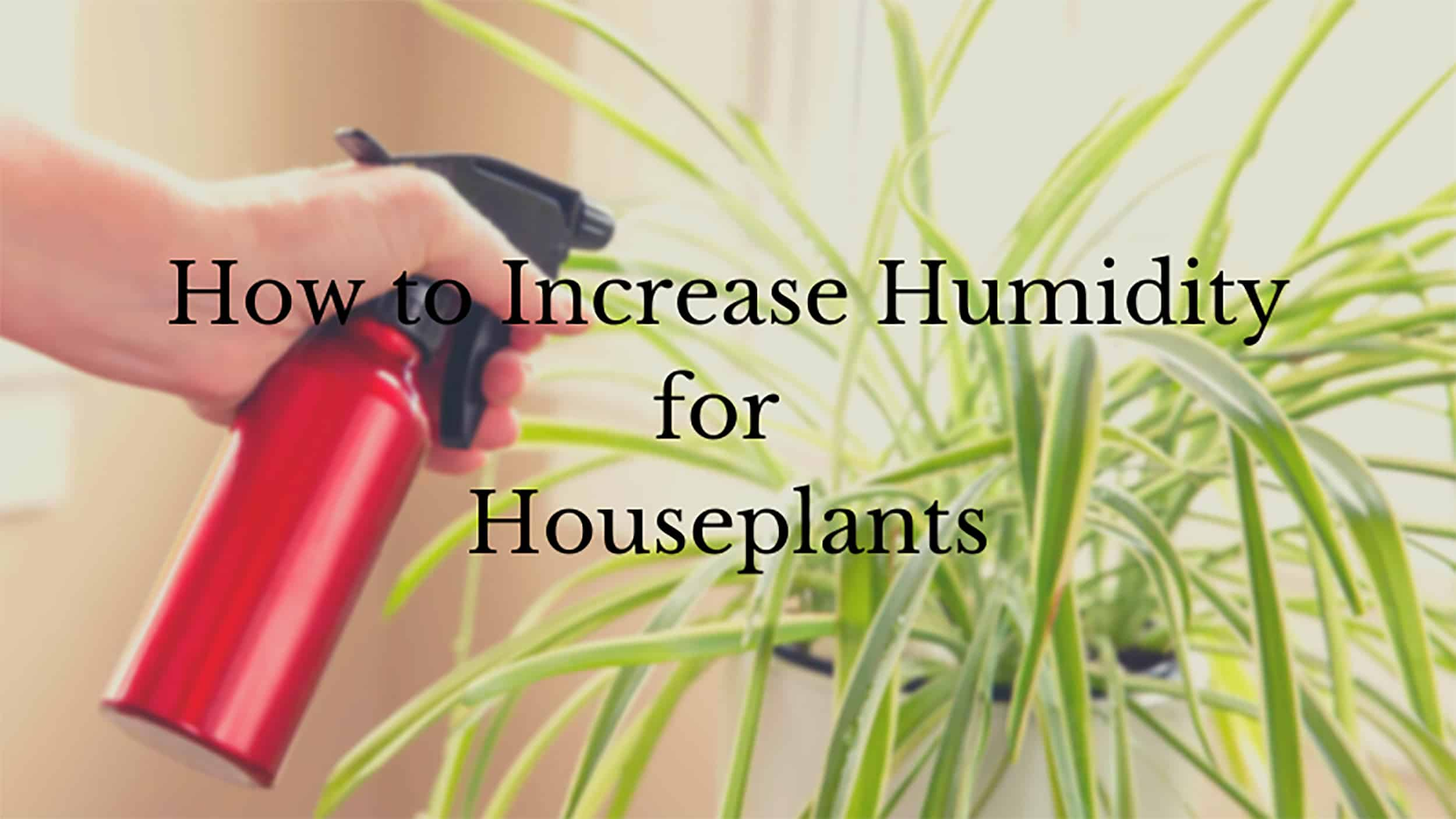 how to increase humidity for houseplants