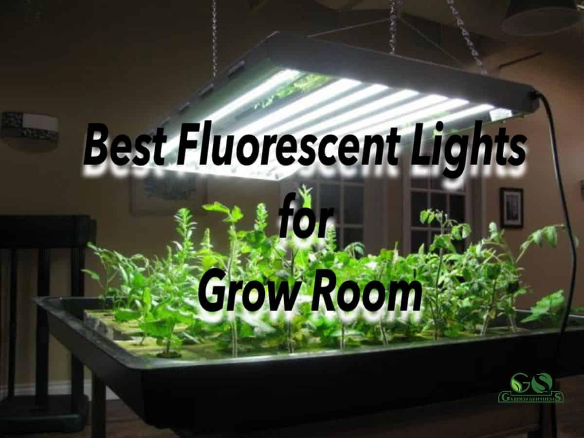Best Fluorescent grow Lights for grow room