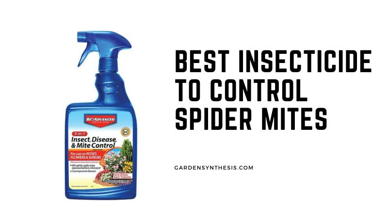 BioAdvanced Fungicide Miticide - Best Insecticide To Control Spider Mites