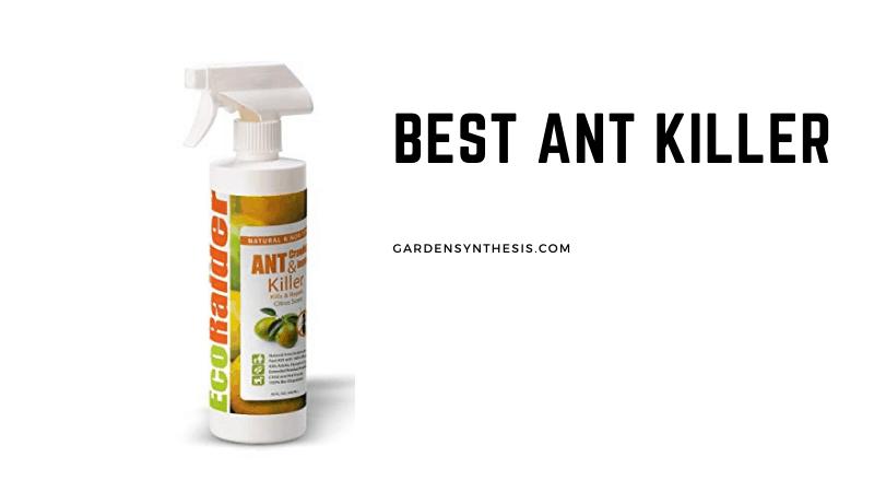 EcoRaider Ant Killer & Crawling Insect Killer - Best Ant Killer