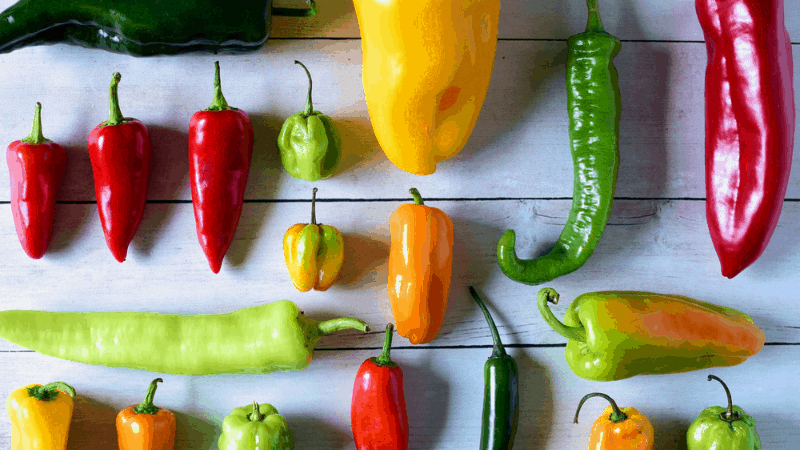 Hot Peppers can kill spider mites