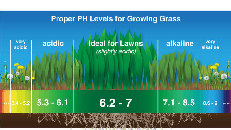 How Much pH Does The Soil Need To Grow Vegetables Like Asparagus