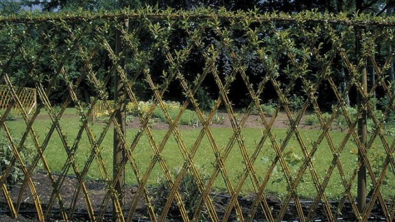 Living Fences for garden Fencing