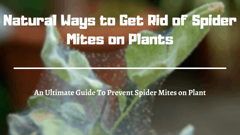 Natural Ways to Get Rid of Spider Mites on Plants