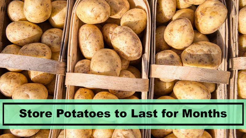 Potatoes: How to store them