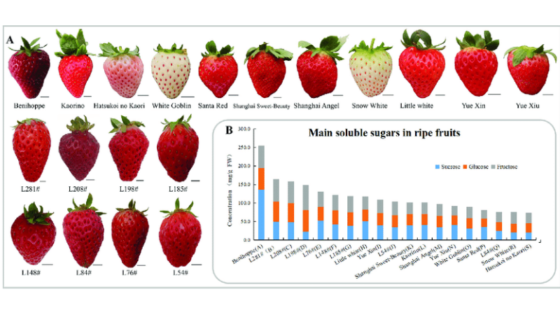 Step 1 - Choosing the Right Variety of strawberries
