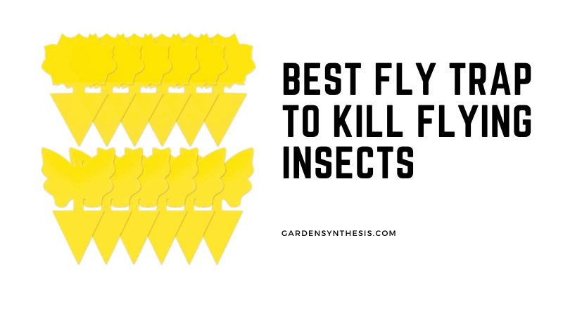 Sticky Trap Fruit Fly Trap - Best Fly Trap To Kill Flying Insects
