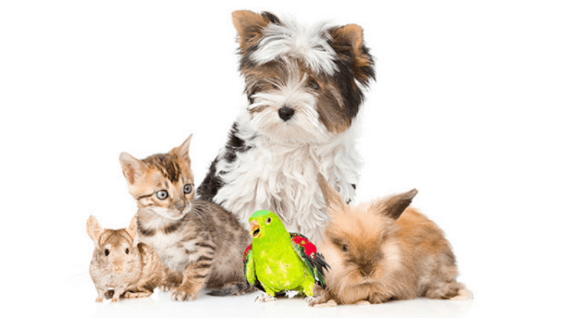 Are Coated Grass Seeds Toxic To Pets?