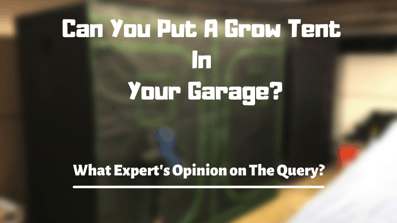 Can I Put My Grow Tent In My Garage