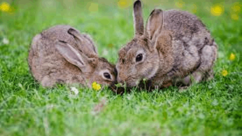 Can Your Rabbit Eat Grass Instead of Dry Grass (Hay)?