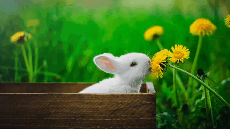 Can rabbits eat sunflower - Is sunflower good for rabbits