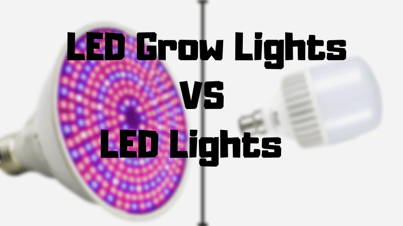 Differences Between LED Lights and LED Grow Lights