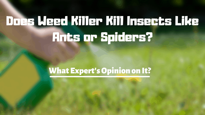 Does Weed Killer Kill Insects Like Ants or Spiders