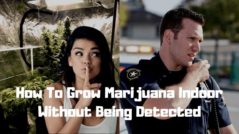 How To Grow Marijuana Indoor Without Being Detected