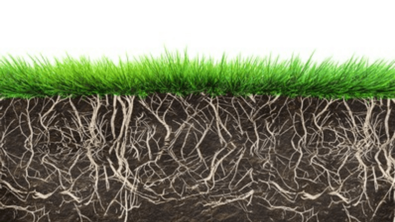 How herbicides are burning grass