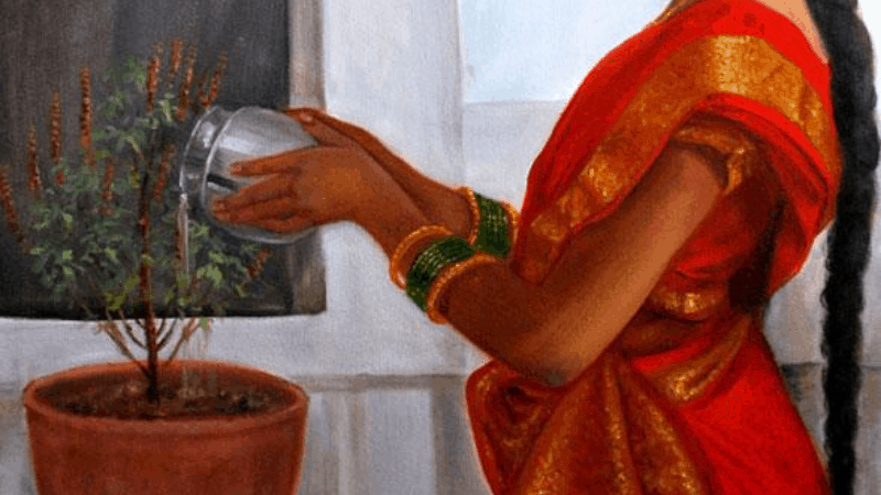 How to water tulsi plant