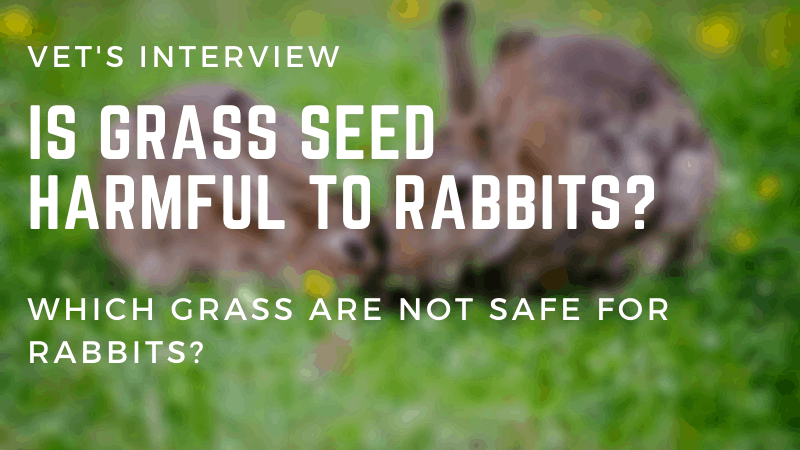 Is Grass Seed Harmful To Rabbits - Which Grass Are Not Safe For Rabbits