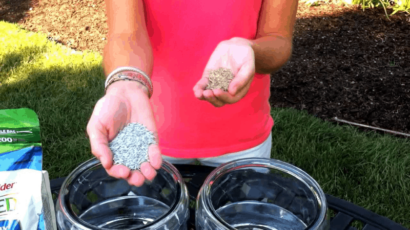 What is the difference between coated and uncoated grass seeds
