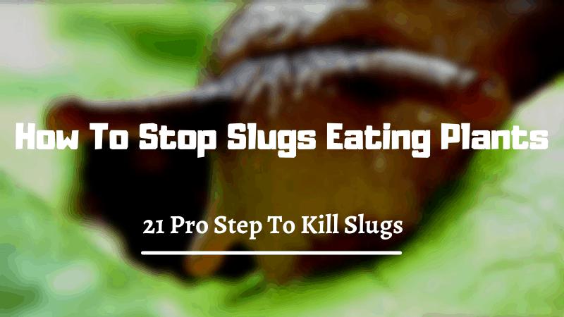 21 Pro Step To Kill Slugs - How To Stop Slugs Eating Plants