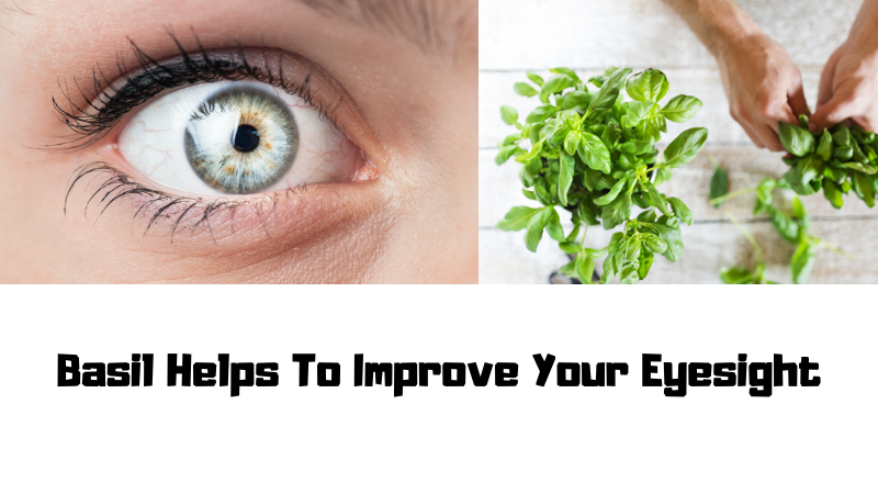 Basil Helps To Improve Your Eyesight
