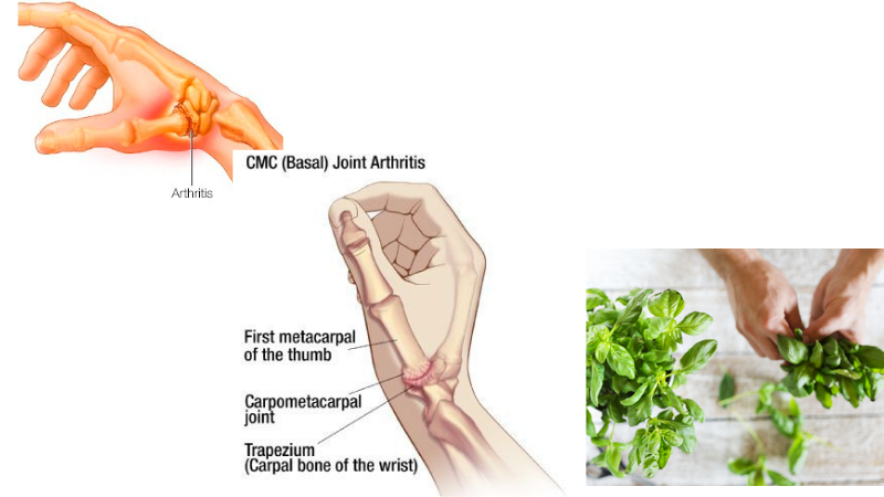 Basil Helps to Ease Arthritis and Joint Pain