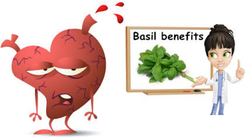 Basil is Effective To Prevent Heart Diseases