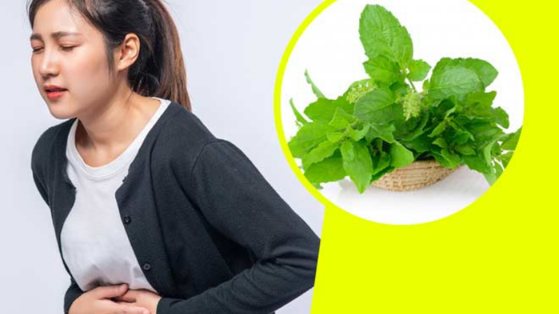 Basil is Good for Stomach