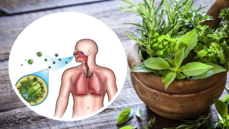 Basil is Helpful for the Respiratory System