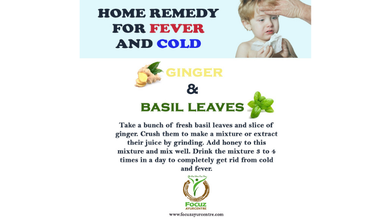 Basil is The Remedy of Fever