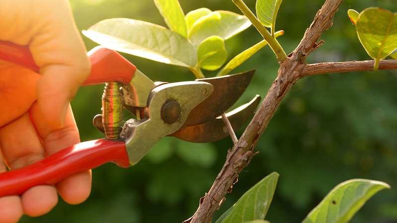 Best Pruning Shear for Comfortable Grip