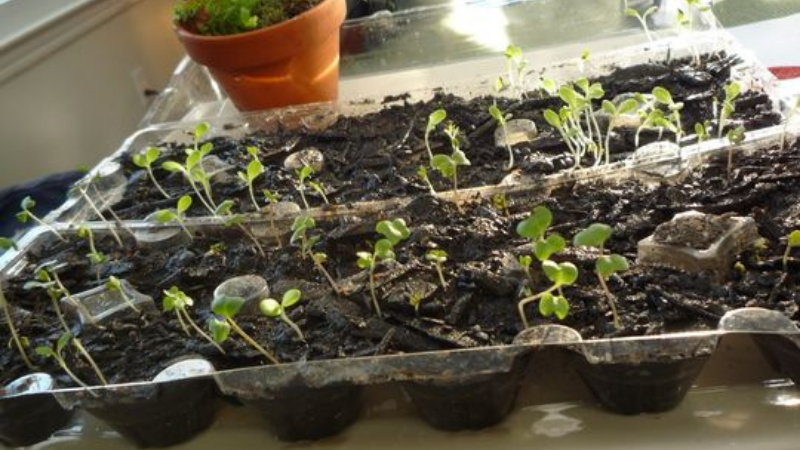 Can I Use Plastic Egg Cartons To Start Seeds?Can I Use Plastic Egg Cartons To Start Seeds?