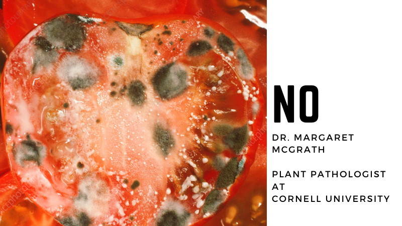 Can You Eat Tomatoes From A Diseased Plant