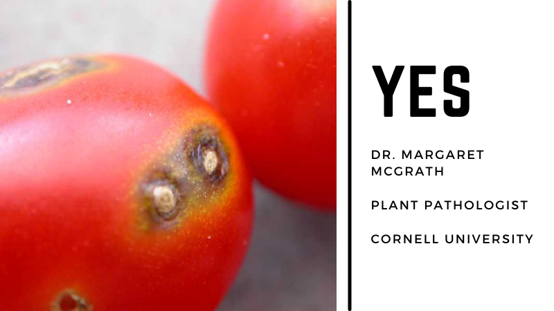 Can You Eat Tomatoes With Black Spots