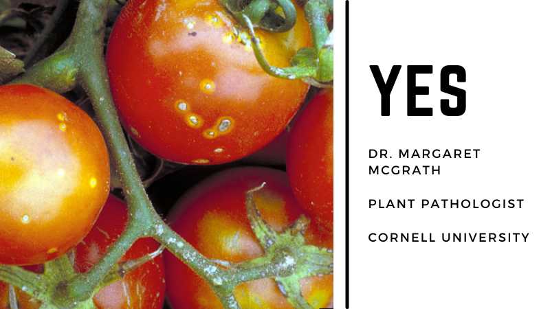 Can You Eat Tomatoes With Brown Spots?