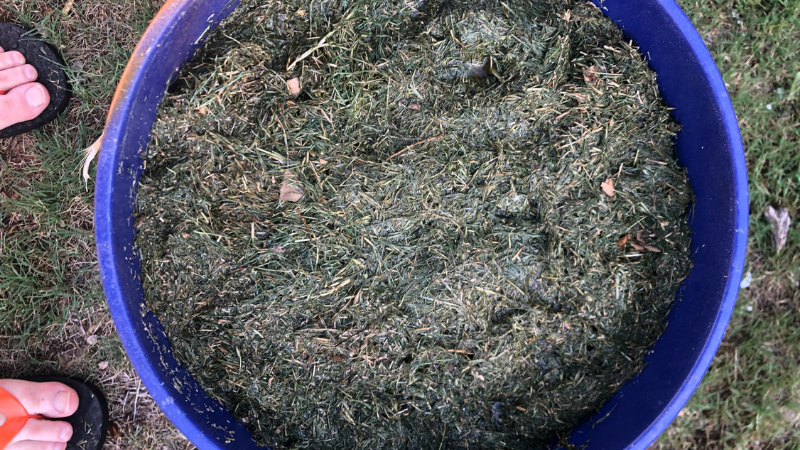 Create Watery Lawn Clipping Fertilizer - What Is The Best Thing To Do With Grass Clippings