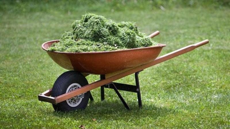 Do Grass Clippings Make Good Fertilizer?