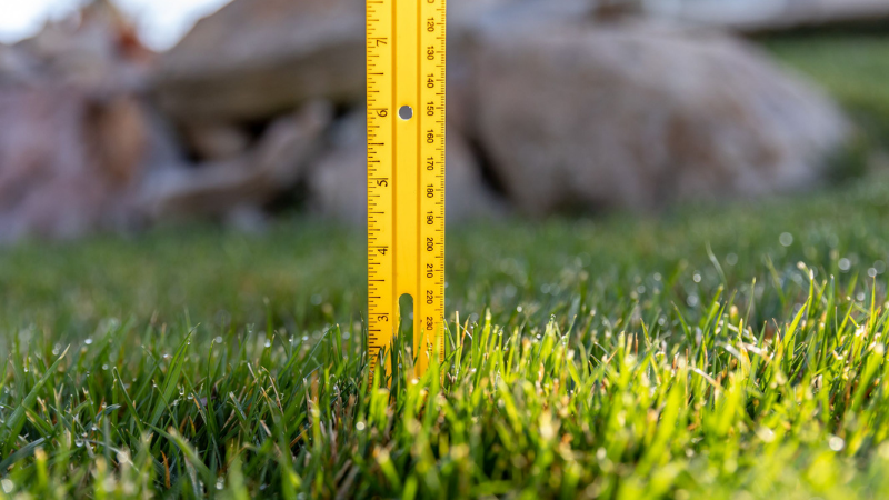 How Do You Make Fertilizer From Grass Clippings - Step 1 - Appropriate Length of Grass
