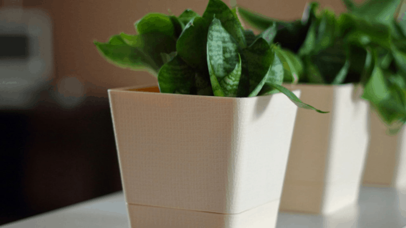 How Long Does It Take to Propagate A Snake Plant?